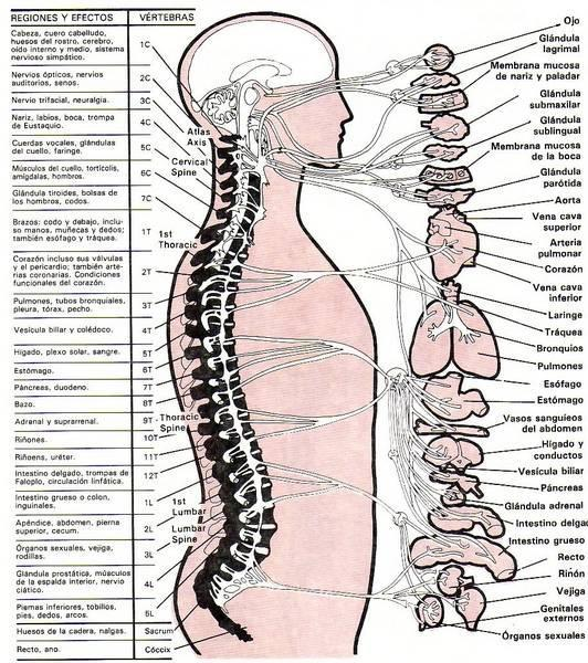 puntos osteopatia