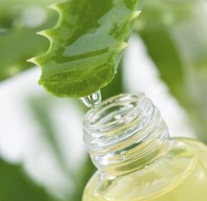 Aloe-Vera-la-planta-curativa-mas-antigua