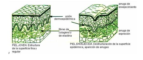 esquema_piel